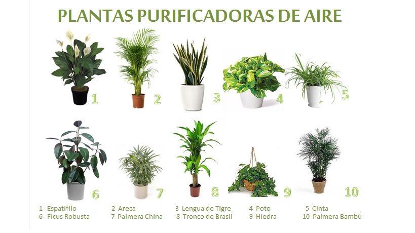 Descontaminaci n de la casa por plantas ecoyolog a for 5 tipos de plantas ornamentales