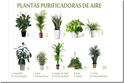 10-Plantas-Purificadoras-de-aire