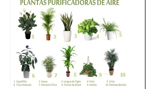 Descontaminaci n de la casa por plantas ecoyolog a for Tres plantas ornamentales